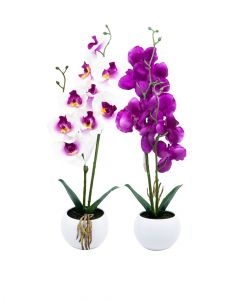 Homesmiths Orchid 11 x 93 cm Assorted 1 Piece